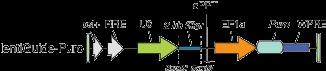 lentiCRISPRv2-and-lentiGuide-oligo-cloning-protocol