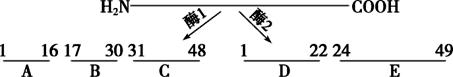 【配套K12】[学习]河北省武邑中学2018-2019学年高一生物上学期第二次月考试题