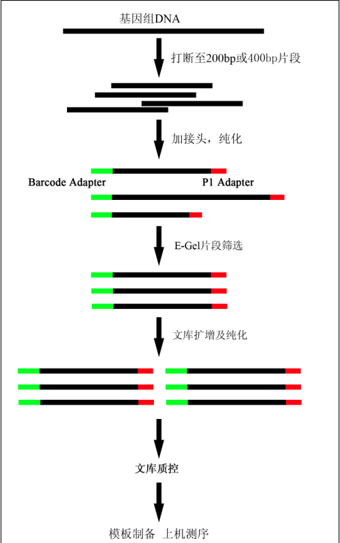 ion torrent 文库构建流程 微生物基因组测序图片