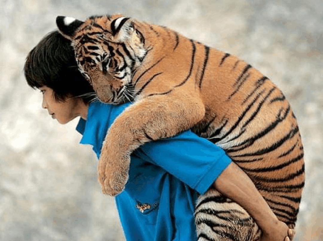 鲁一鲁人与动物_所有分类 小学教育 小学作文 人与动物的和谐相处ppt  第1页 下一页