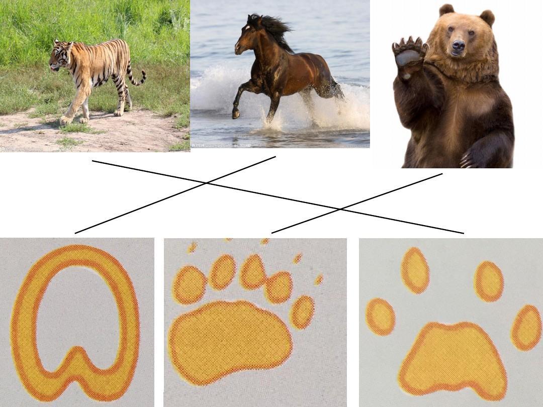 脚印的联想课件ppt图片
