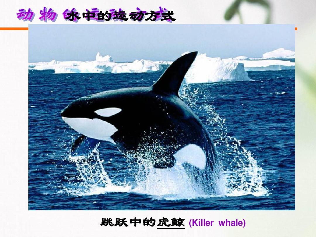 1动物的运动方式 (1)ppt图片