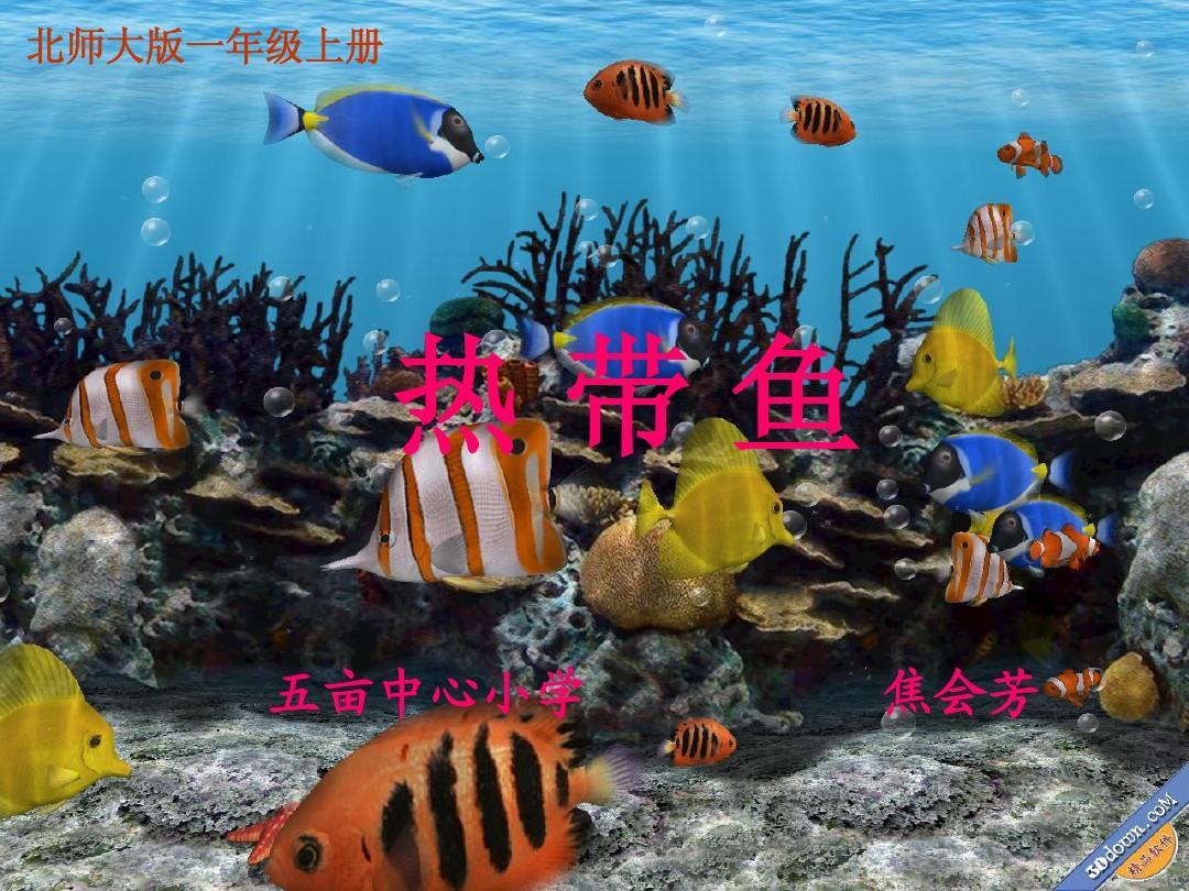 热带鱼五亩中心小学焦芳131小学图片