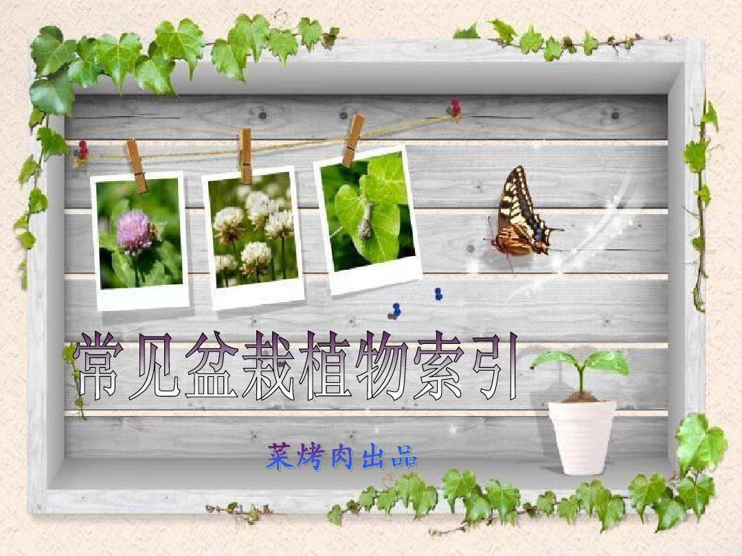 常见盆栽植物索引