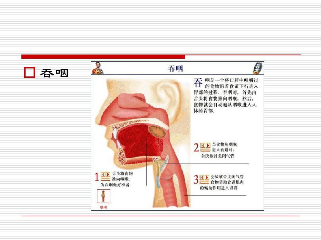 中风后吞咽障碍的康复治疗ppt