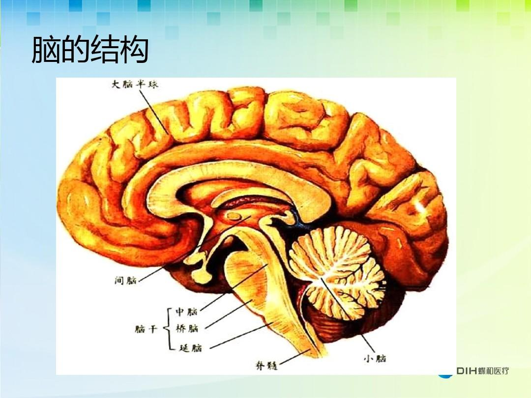 脑供血不足症状与啥一样_脑部供血不足的症状_大脑供血不足的症状吃什么药
