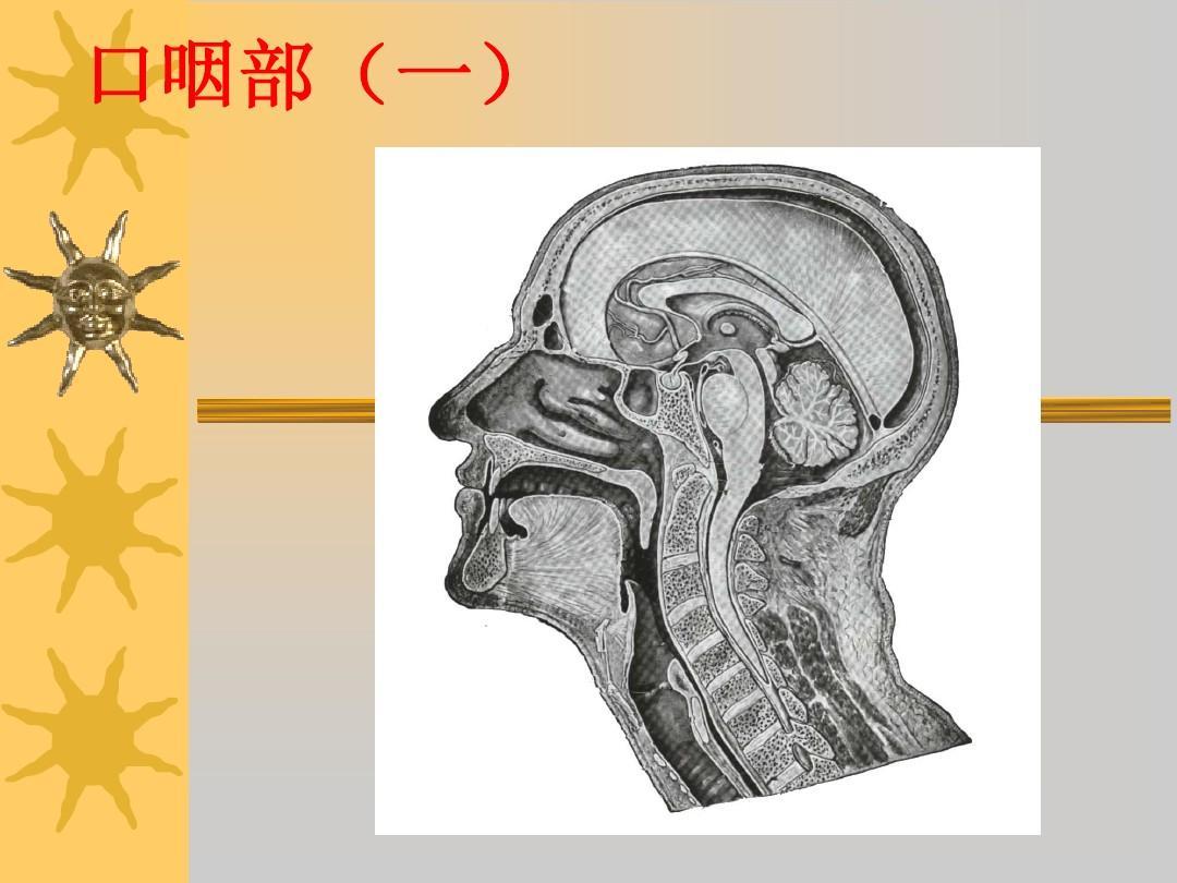 咽部充血_侧颅底,咽的应用解剖ppt