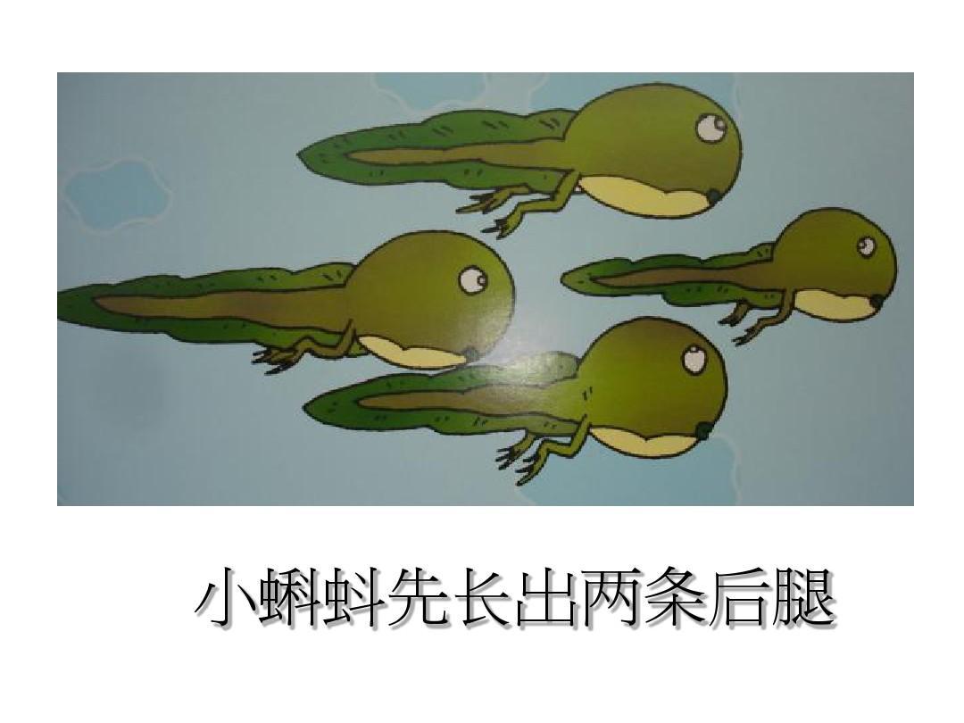 小蝌蚪先长前腿还是后腿图片
