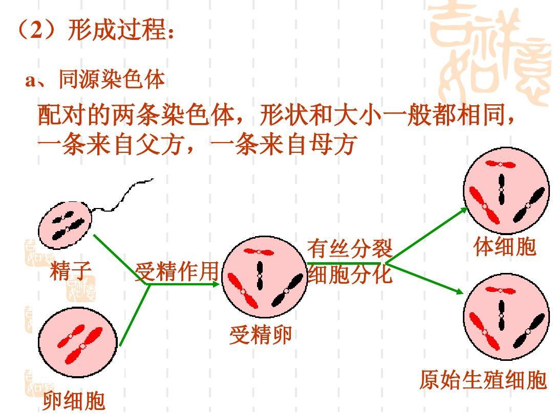 减数分裂与有性生殖精品的形成(课件化学)ppt教案设计2苏教版细胞必修图片