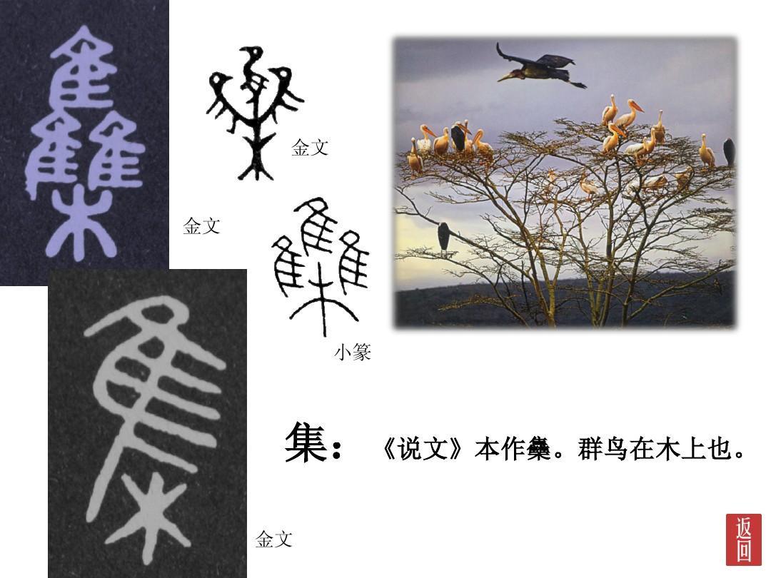 ?{?}_集:《说文》本作雧.群鸟在木上也. 金文