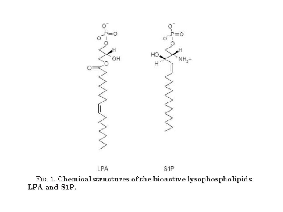 溶血磷脂g蛋白偶联受体ppt图片
