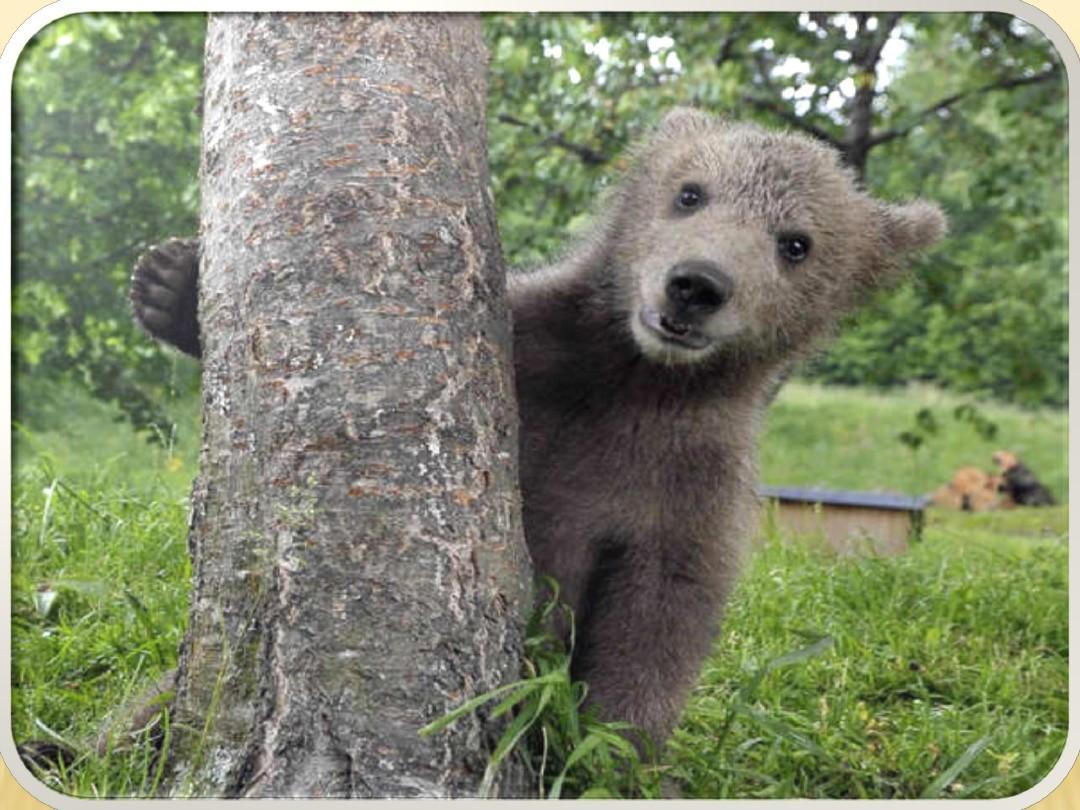 unit 6 wisdom of bear wood