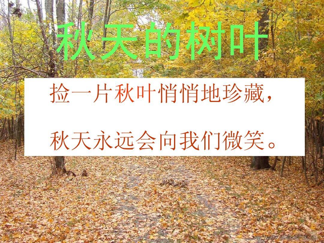 秋天的树叶_作文课件