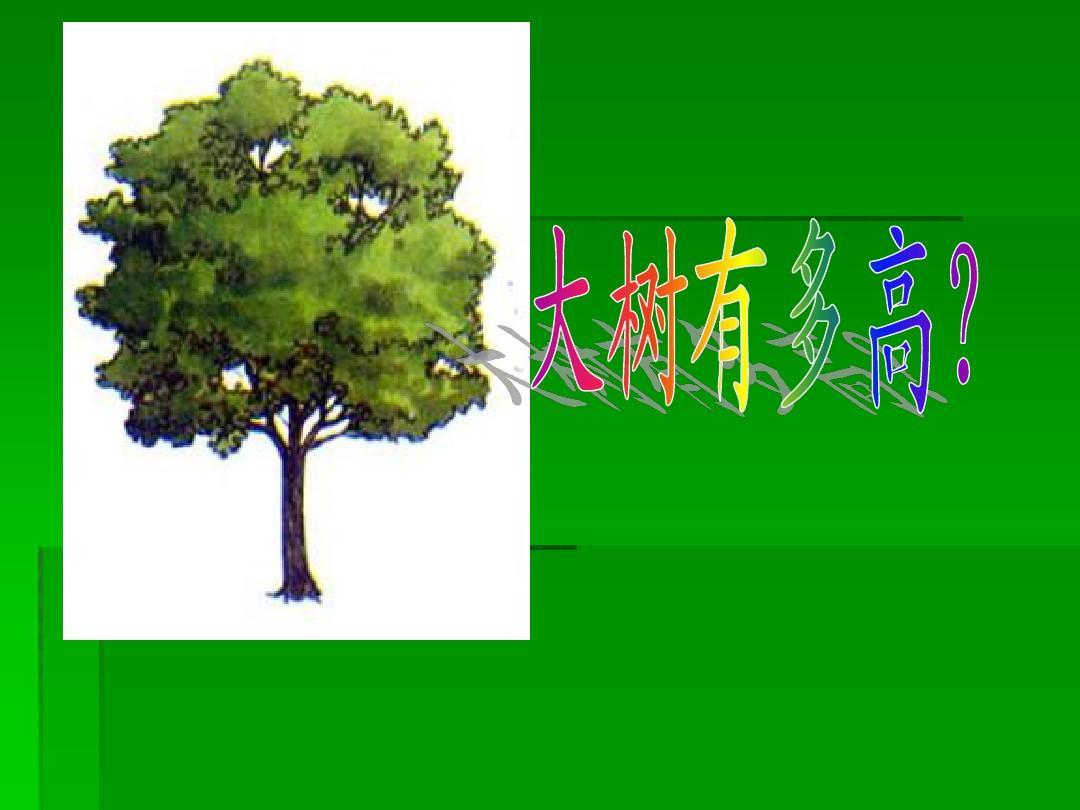 大树有多高ppt图片