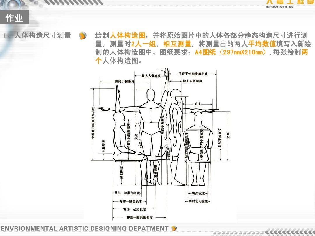 人体构造固)�_图纸要求:a4图纸 297mmx210mm) 每张绘制两 图纸( 制的人体构造图中.