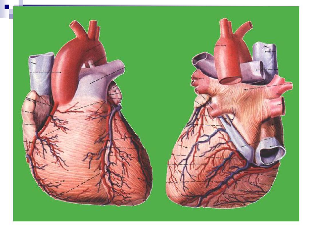 人体生理解剖学教材_第11页 (共85页,当前第11页) 你可能喜欢 人体系统解剖学 最全人体