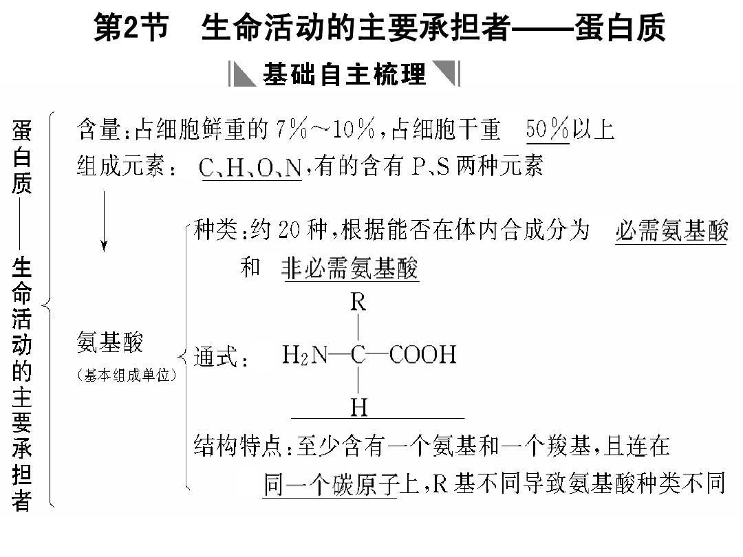 海南省2011届高三生物第一轮复习:生命活动的主要承担者——蛋白质(新人教版必修1)