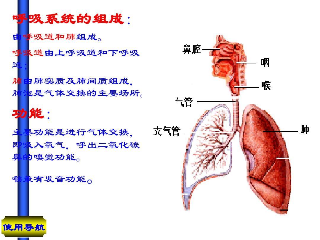 人体结构和功能_人体的组成ppt