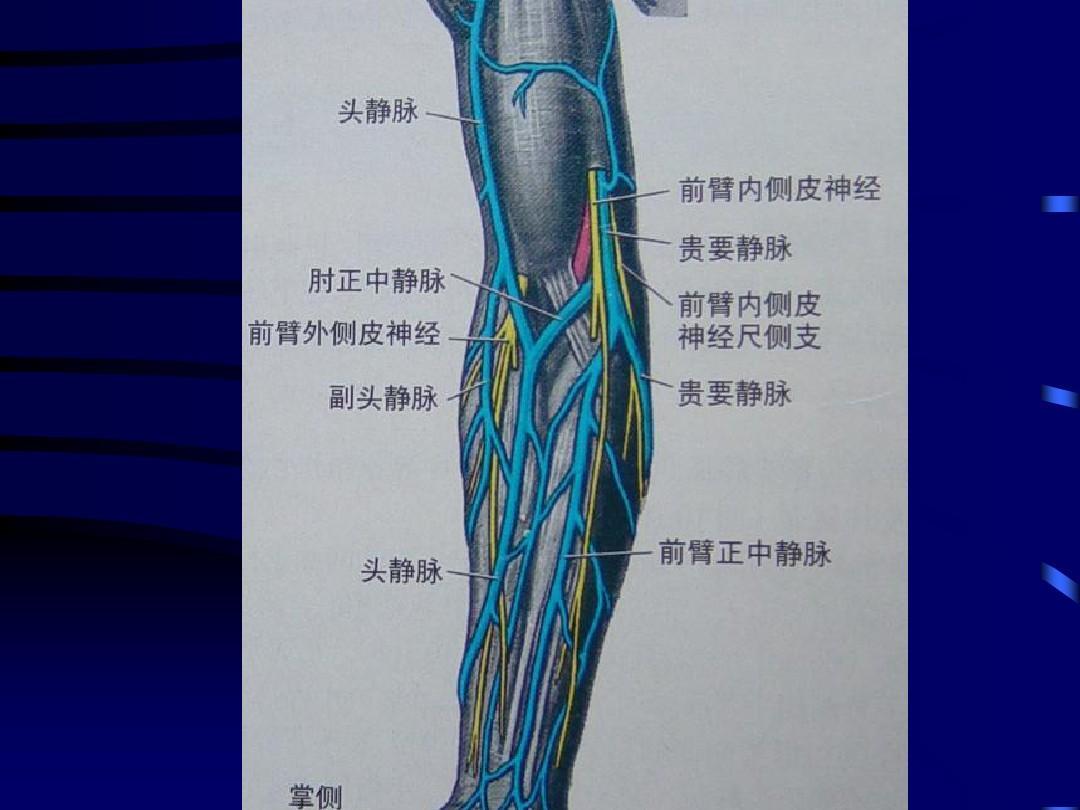 最新深静脉穿刺置管术(颈内,锁骨下,股静脉)含解剖图谱ppt