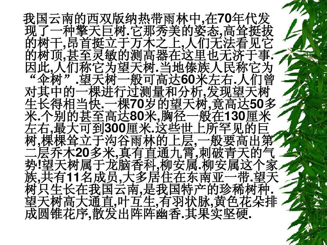 亚洲色情24p_鄂教版七年级语文上5,望天树_课件5(24p)ppt