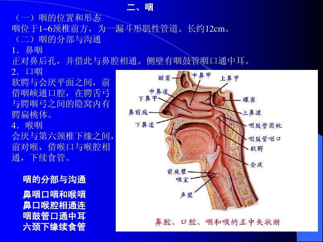 人体性器呈_人体系统解剖学