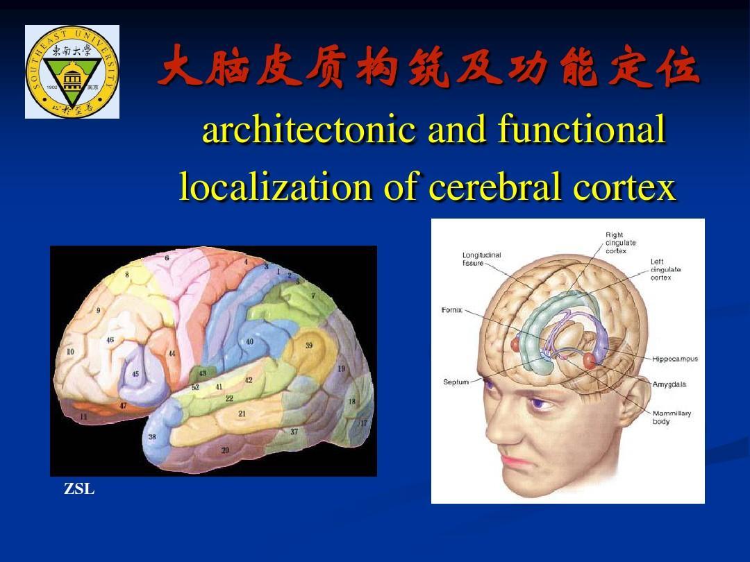 大脑皮质功能分区图_大脑皮质结构与功能分区4_word文档在线阅读与下载_无忧文档