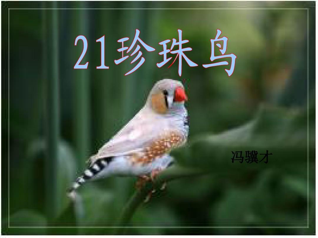 苏教版四课件年级电压珍珠鸟ppt精品语文4上册和电压表的使用备课图片