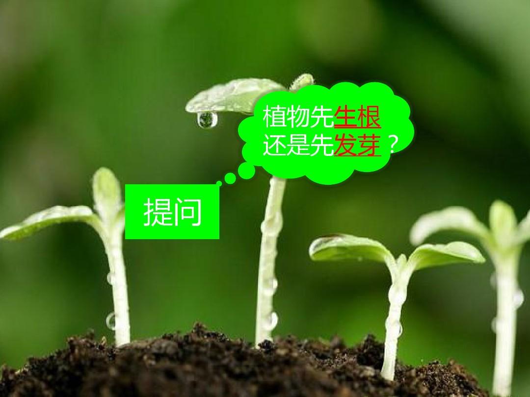 小学自然课件-植物的根茎叶PPT