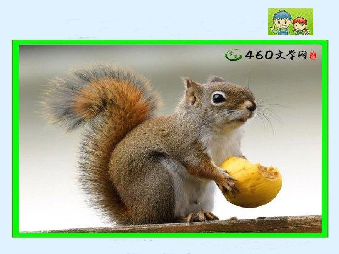 22《跑进家来的文档》PPT课件_word松鼠v文档苏教版第七单元分与合教学设计图片