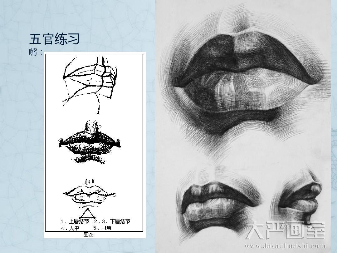 静物素描 结构素描 素描基础教程 素描基础入门 素描头像结构 钢笔画