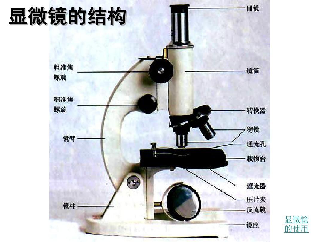 1使用高倍显微镜观察细胞ppt图片