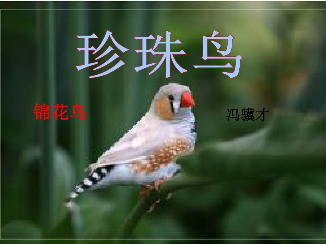 化学版五医用上册人教《珍珠鸟》PPT语文年级课件教学大纲图片