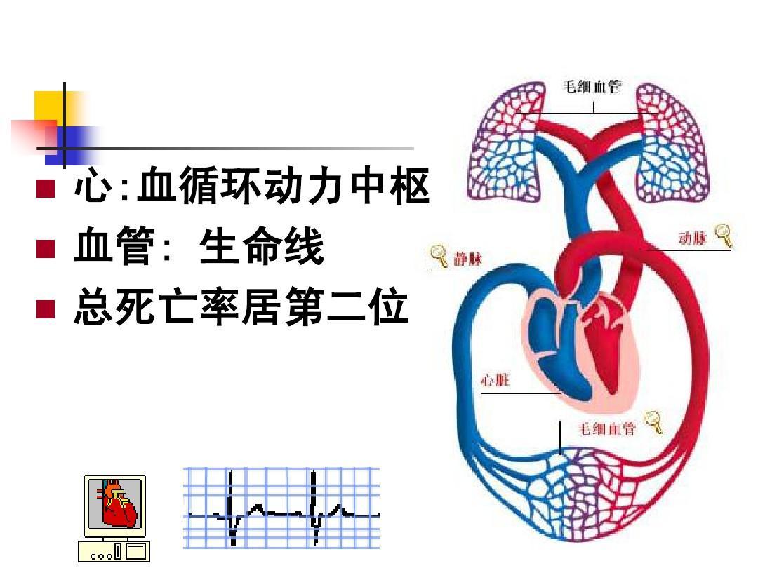 心:血循环动力中枢 血管: 血管: 生命线 总死亡率居第二位图片