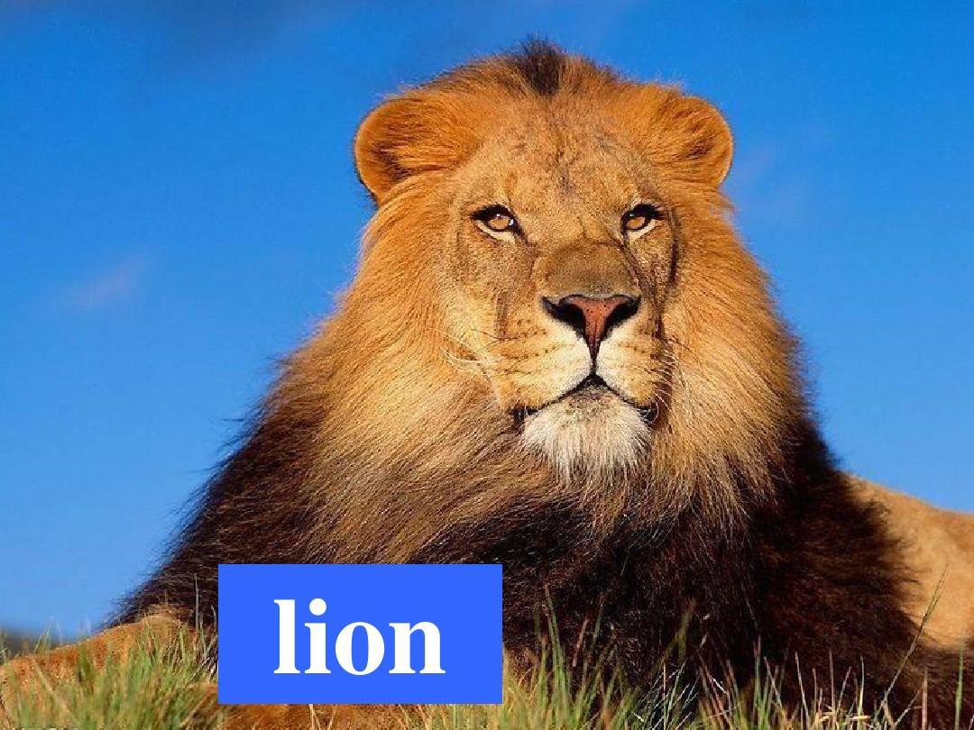 教学教版高中英语v教学二unit_4_wildlife_protec动物的新人大班食物ppt图片