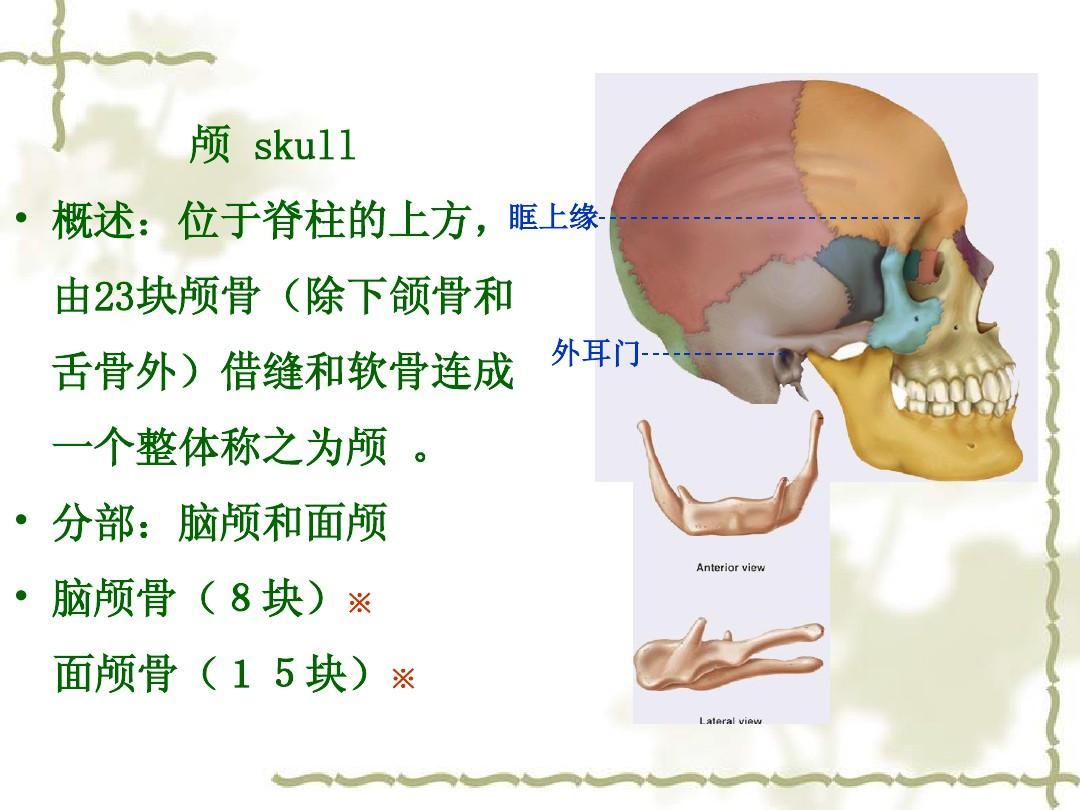 颅骨形态结构