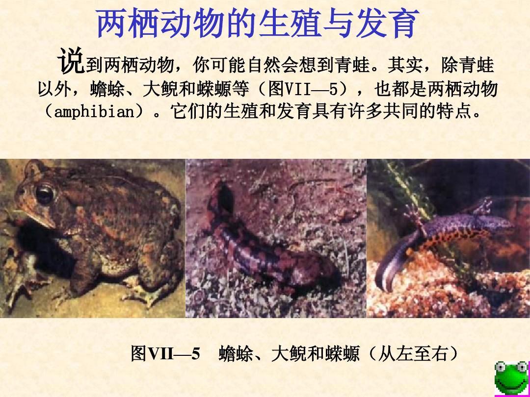 八年级生物两栖动物的生殖和发育3