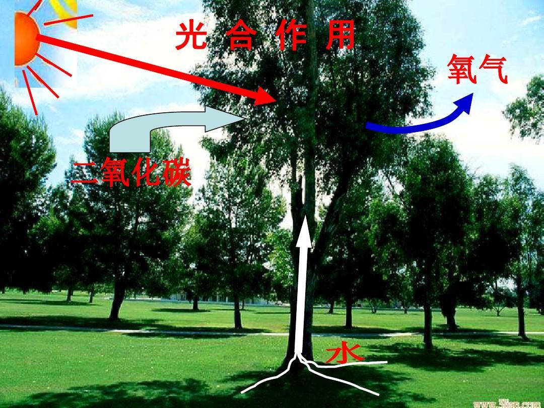 苏教版课件高中v课件一:4-2光合作用的过程作文(ppt生物高中野草600字图片