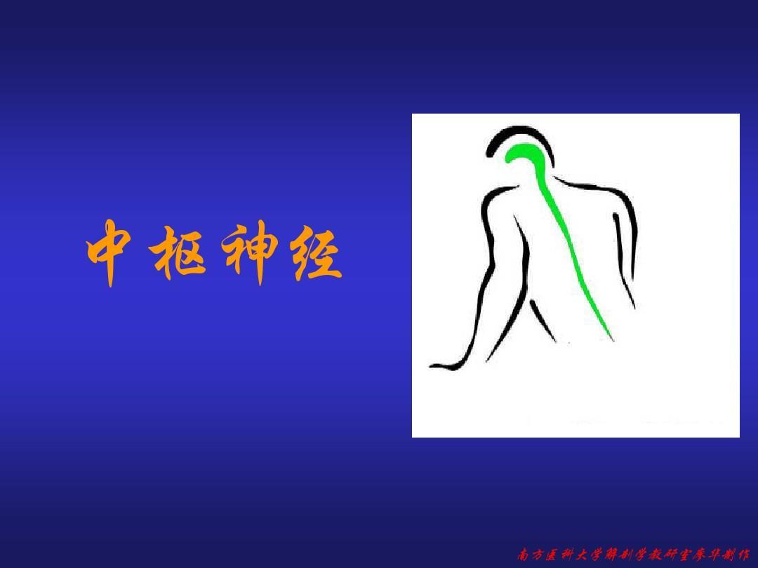 解剖学之中枢神经系统