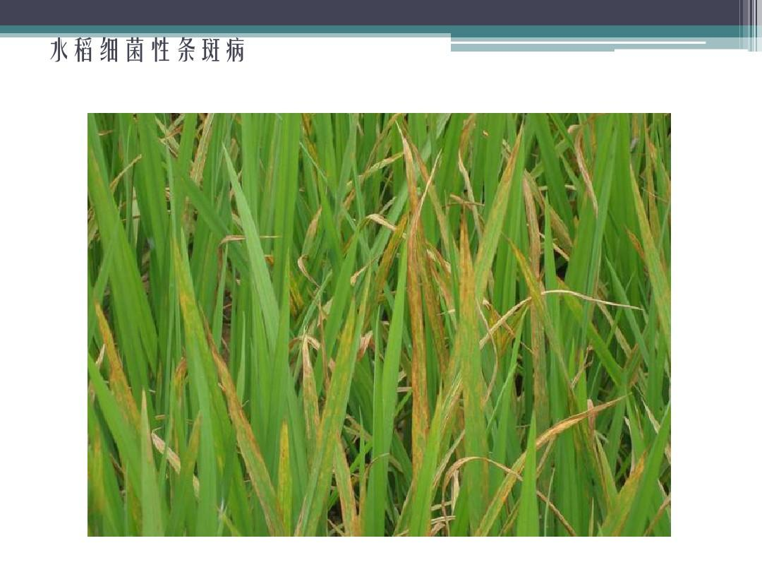 德州牛仔 刚刚!广东水稻每亩氮肥最高用量定了:10公