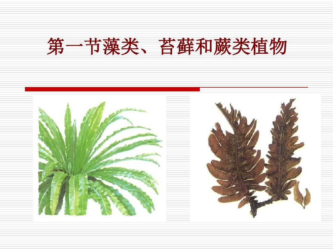 新人教版七年级上册第三单元第一章第一节藻类、苔藓和蕨类植物