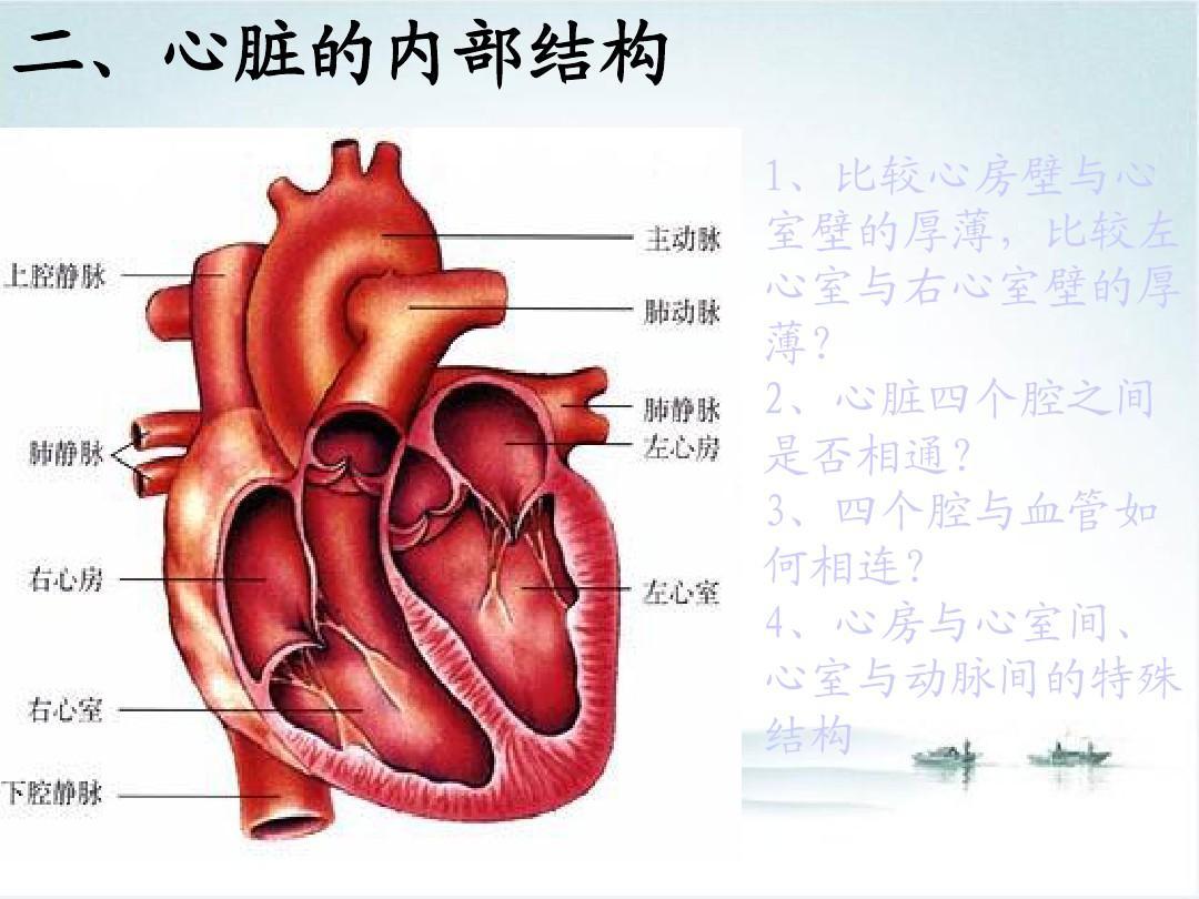 人体血分布�_10.2《人体的血液循环》1(苏教