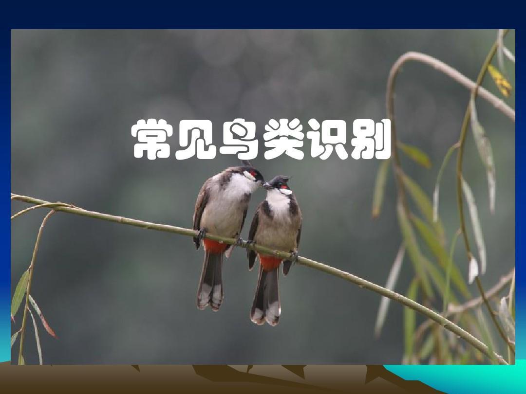 常见鸟类的识别