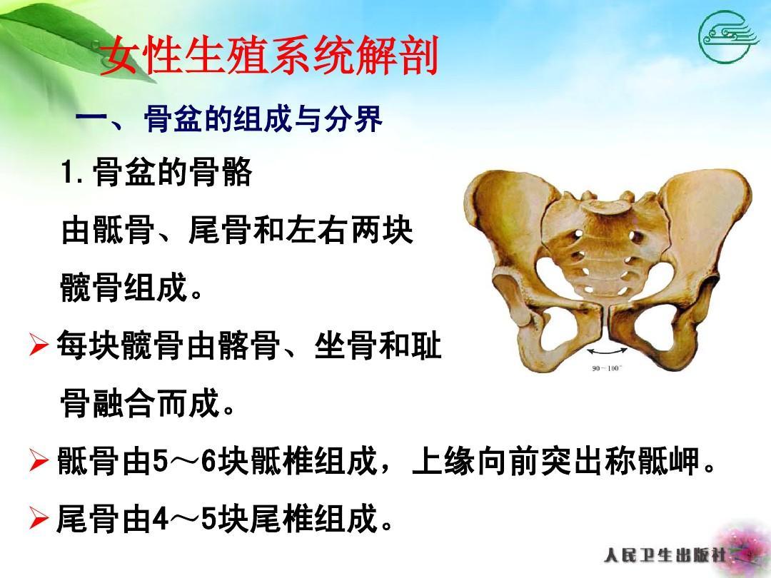 ��_骶 尾 由4~骨5尾块组椎.成
