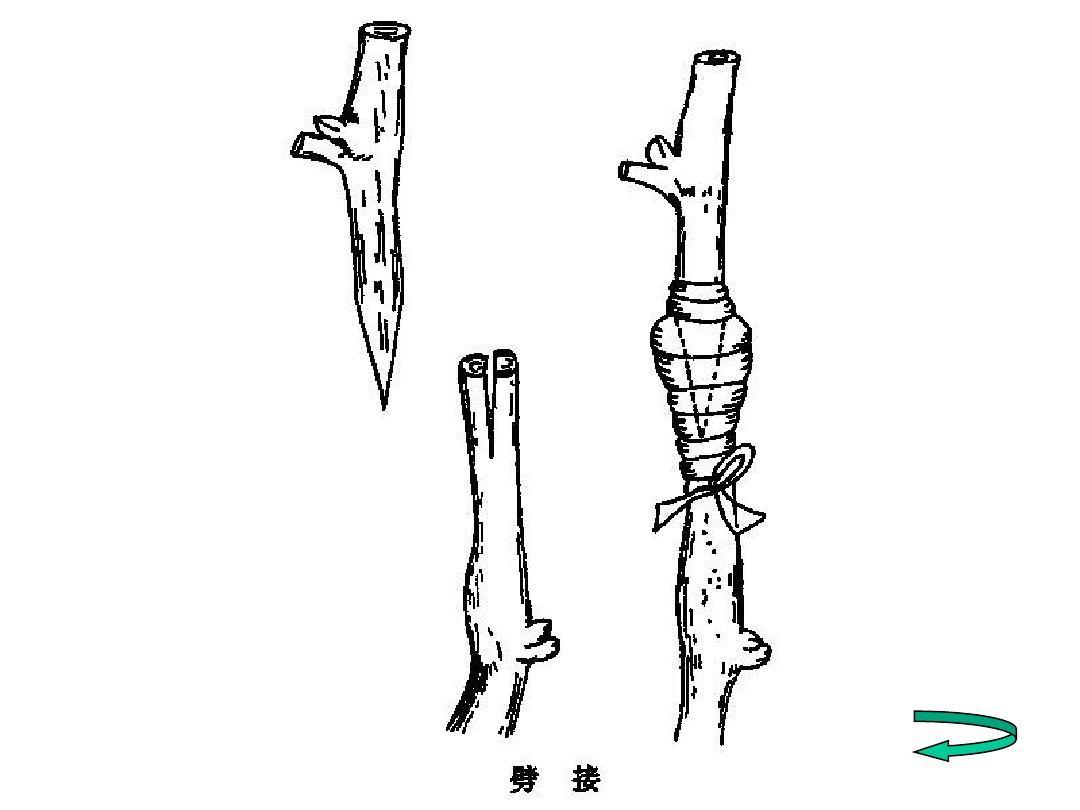 文档网 所有分类 农林牧渔 林学 果树育苗ppt  第18页 (共36页,当前第图片