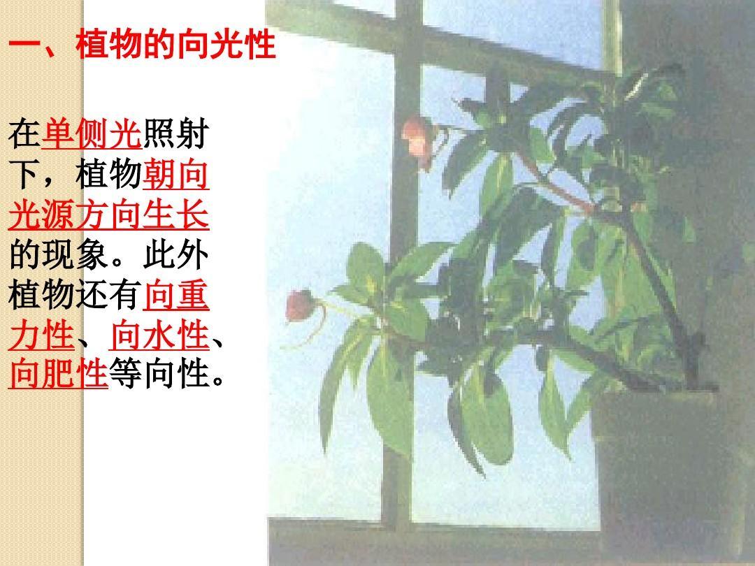 生物:第3章《植物的激素调节》复习课件(新人