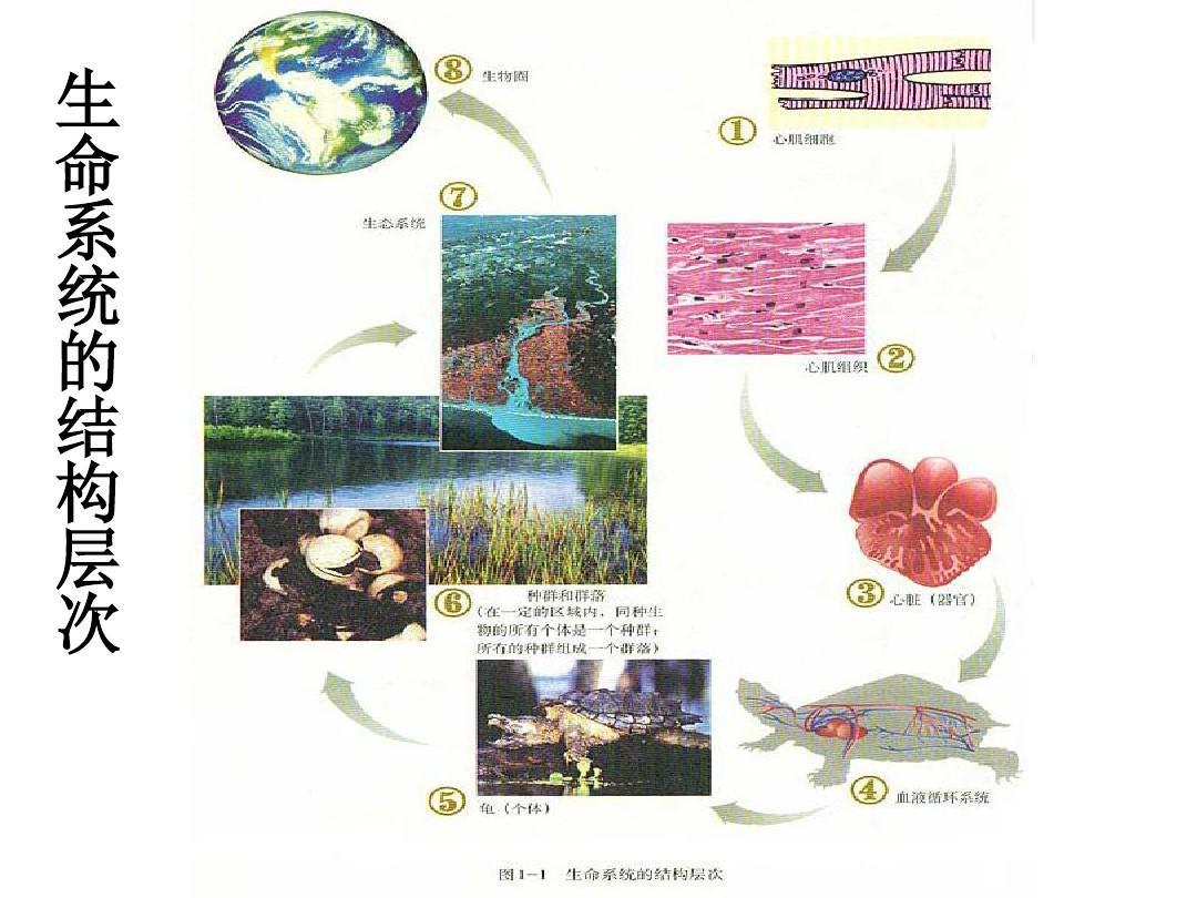 高中版人教生物高考三4.1特征种群教学课件共29张ppt1高中宣传励志必修图图片