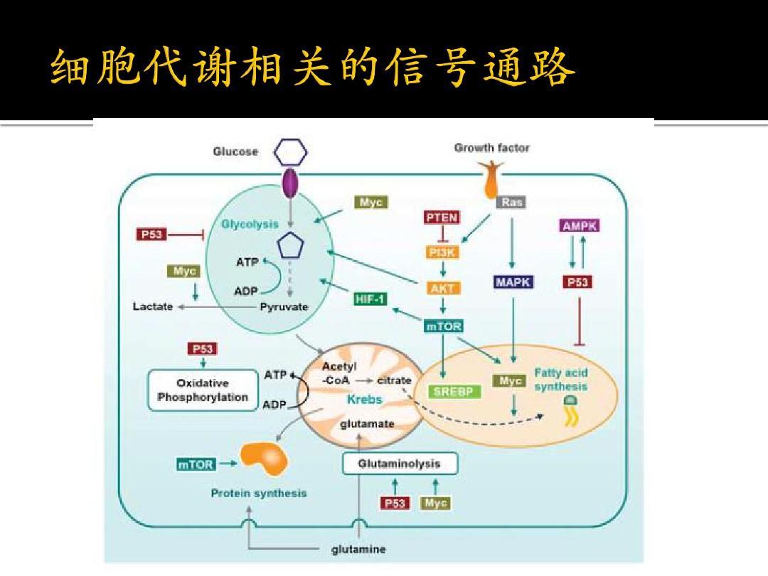 细胞教案运算与肿瘤微环境ppt连加连减混合代谢肿瘤图片