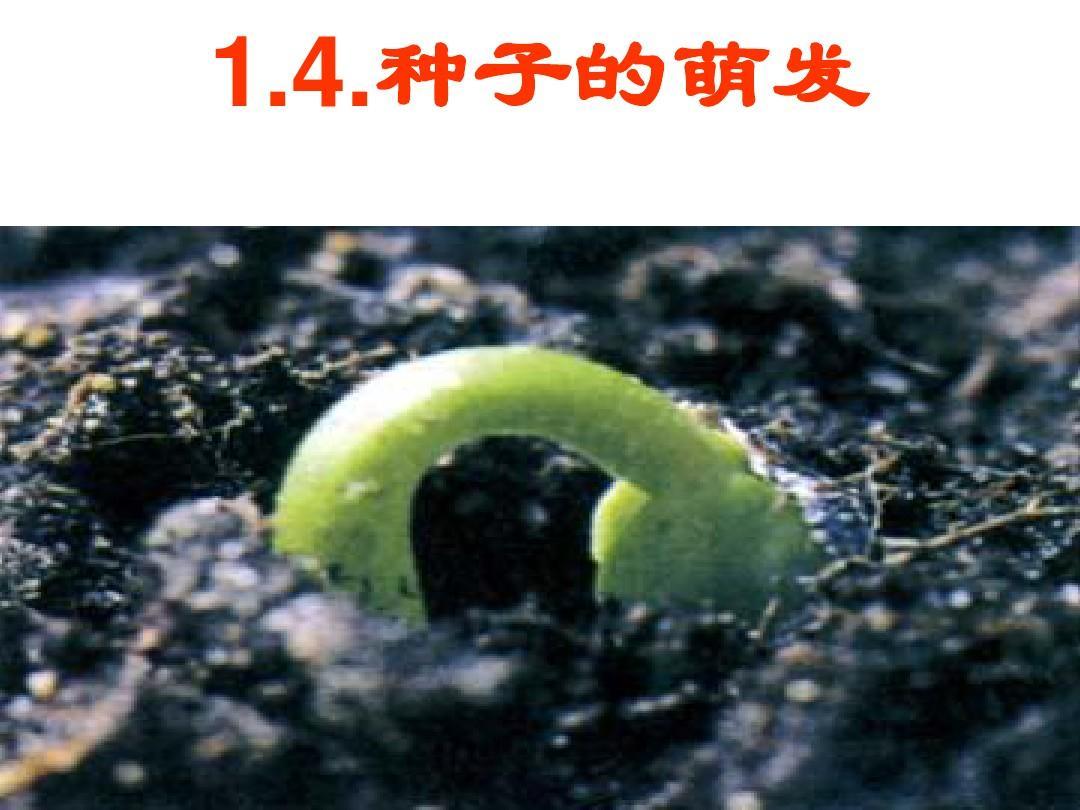 第4节__植物的一生(第2课时)