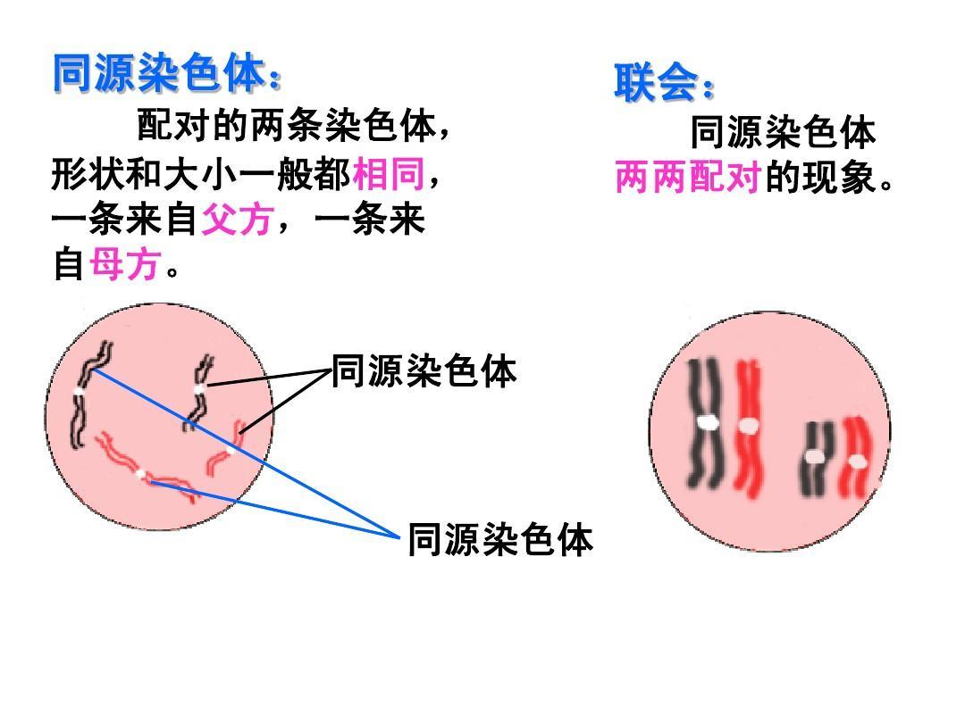 减数形成与有性生殖过程的分裂,常见和卵细胞的形成课时ppt酸的教学设计第一细胞精子图片