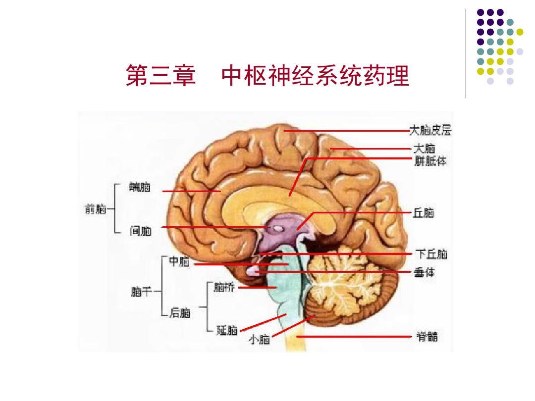 第三章 中枢神经系统药物PPT